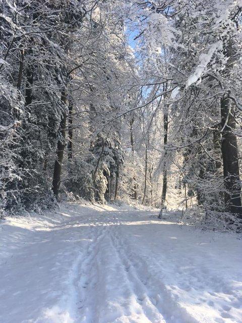 Winterwonderland_2019